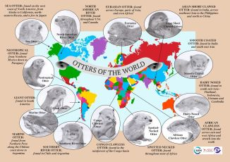 ENGLISH Otters of the World